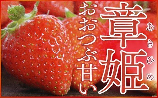 A-9 大粒で甘い!坪井農園のこだわりいちご(章姫)1箱