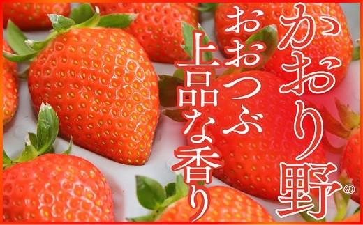 A-70 大粒で甘い!坪井農園のこだわりいちご(かおり野)1箱