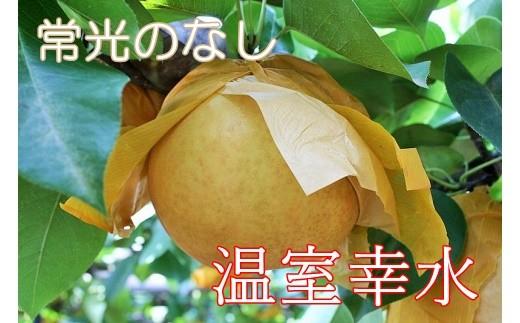 Q-8 【常光のなし】「温室幸水」~鴻巣市産の梨~