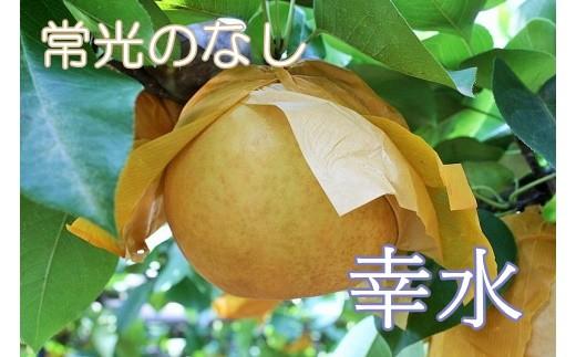 甘くみずみずしい常光(じょうこう)の旬の梨です