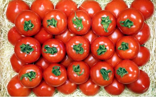 フルーツトマト「星のしずく」 1.4kg [№5541-0073]