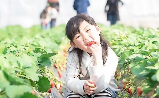 土づくり、減農薬、減化学肥料、「ふくおかエコ農産物」は「おいしさ」と「安全」の証です。
