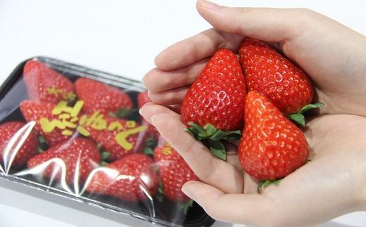 D-01 【先行予約】甘熟いちご「紅ほっぺ」・2パック入×2箱(総量1kg以上)