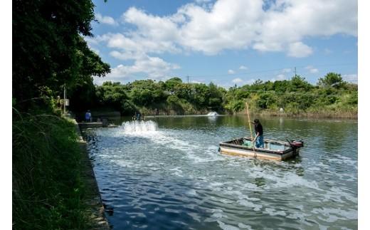 渡辺水産養殖池