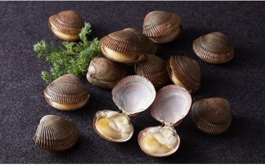 陸前高田市で全国初の養殖事業化が成功した高級貝「イシカゲ貝」
