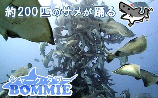 約200匹のサメと一緒に泳ぐことができます。