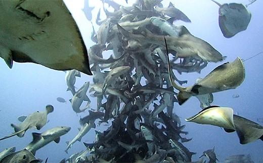 サメとエイが大集合! シャークタワーの完成です。