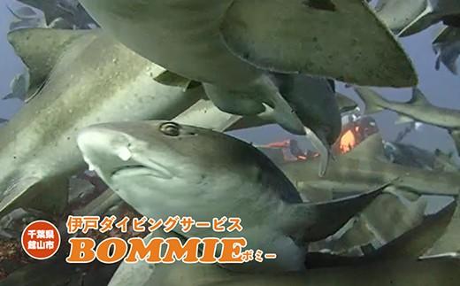 目の前をサメが悠然と泳ぎます。