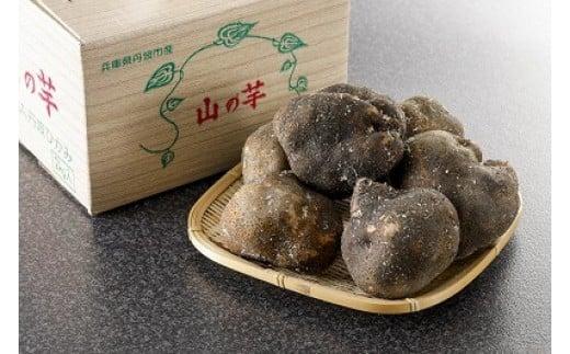 兵庫県丹波市産 山の芋