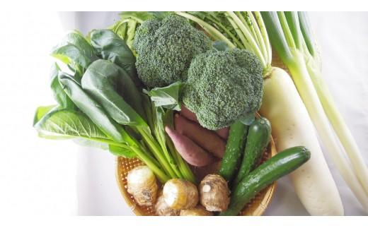 MS-01 新鮮朝採れ野菜 お手ごろセット