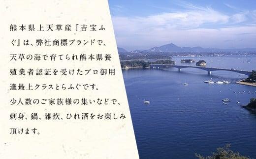 吉宝ふぐ【極】コース(40cm赤絵皿全盛り・8~10人前、白子、唐揚げセット)