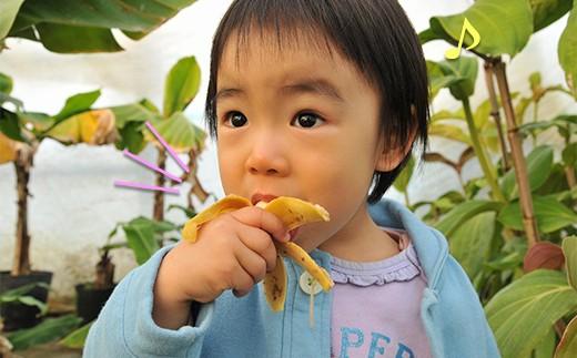 モンキーバナナの実は食べることもできます。
