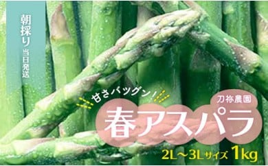 【2021年春発送】朝採り当日発送 甘さ抜群!刀祢農園の春アスパラ 2L~3Lサイズ(1キロ)
