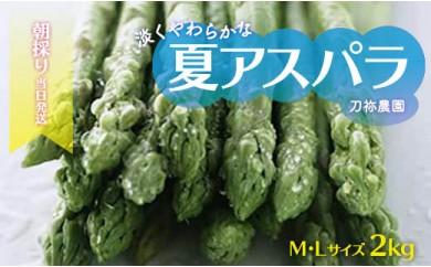 【2021年夏発送】朝採り当日発送 柔らかな!刀祢農園の夏アスパラ M~L(2キロ)