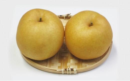 [№5850-0431]ホウナンの梨(新高梨)約4kg