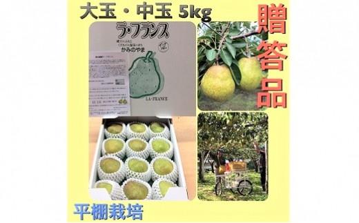 0102-2005 西洋梨(ラ・フランス)5kg 贈答品 大玉