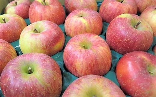 0075-2015 りんご(葉とらずサンふじ)5.5kg ご家庭用