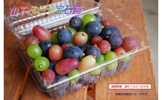 山下ぶどう宝石箱(4パック)