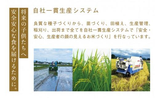 稲刈りの様子です。