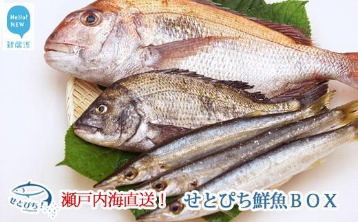 長崎 県 漁 連 鮮魚 ボックス