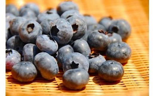 栽培期間中無農薬・有機肥料で栽培したブルーベリー 1kg[C2240]
