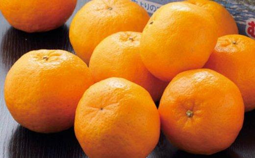 【訳あり】人気の柑橘室戸産ポンカン3kg