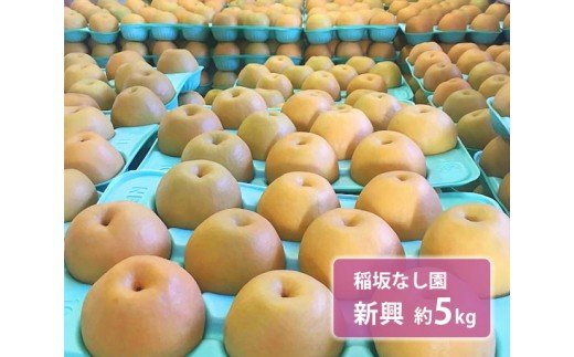 No.126 稲坂なし園 新興 約5kg / 梨 なし 果物 千葉県 特産品