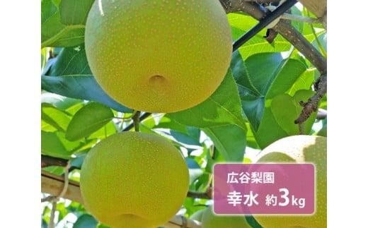 No.130 広谷梨園 幸水 約3kg / 梨 なし 果物 千葉県 特産品