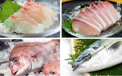 【刺身セット】佐伯産鯛&ぶり 低温熟成魚切り身 各約300g