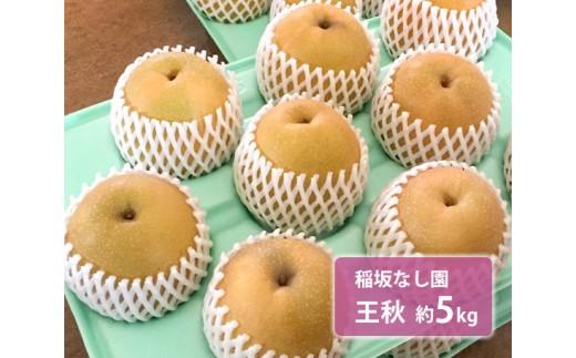 No.125 稲坂なし園 王秋 約5kg / 梨 なし 果物 千葉県 特産品