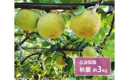 No.131 広谷梨園 秋麗(しゅうれい)約3kg / 青梨 なし 希少品種 果物 千葉県 特産品