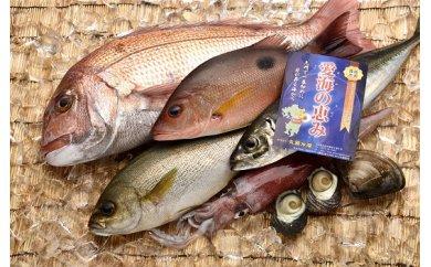「愛海の恵み」 豊後水道 詰め合わせセット(約2.8g~約3.2kg 3~5品)