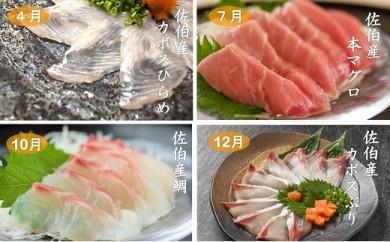 【季節の特別なお刺身定期便】春夏秋冬  佐伯産の特別なお魚をお刺身にしやすい切り身にして年4回お届けいたします