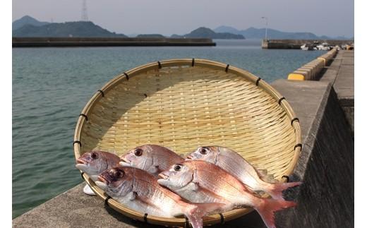 島に囲まれた竹原市沿岸は、おいしい魚が育ちます。