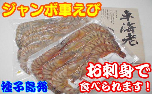 ジャンボ車えび(生食用冷凍・化粧箱入り) 450pt NF