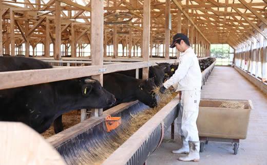 和牛約300頭を肥育する農家直営の佐賀牛販売店からおいしい佐賀牛を食べてもらいたい想いから真心を込めて、毎日牛と接しています。