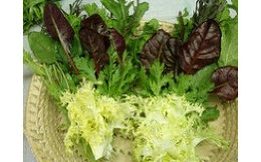 種類豊富なサラダ野菜