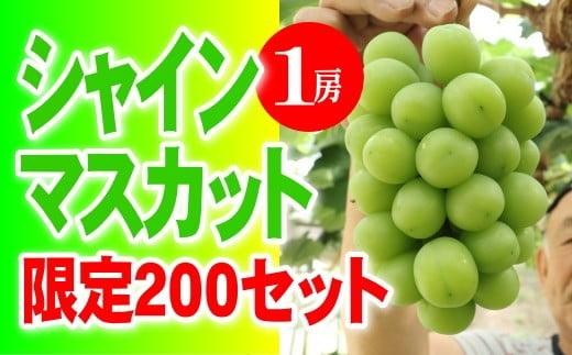 CC-72 シャインマスカット1房 大粒秀品(清麻呂ぶどう)