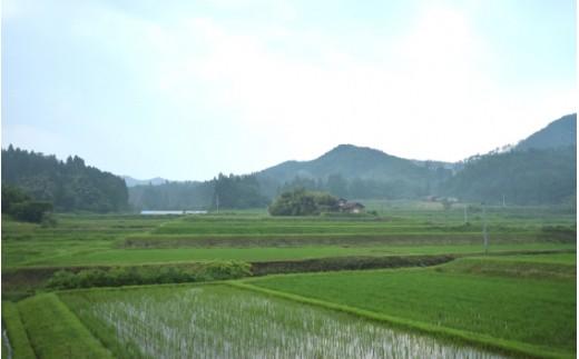 空気は澄んでいて水もきれい。中山間地域なので、季節の寒暖差でお米がおいしく育ちます。