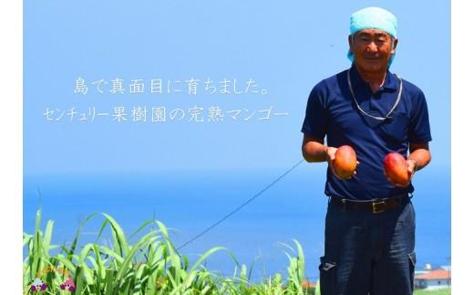 徳之島の勝さんが大切に育てた美味しい完熟マンゴーをお届け致します!