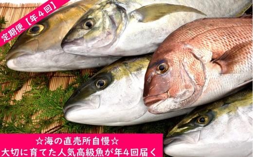 【高級魚定期便】☆海の直売所自慢☆大切に育てた人気高級魚が年4回届く
