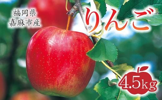 【10月上旬から順次発送】りんご 4.5kg 九州産 林檎 陽光 新世界
