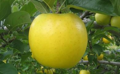 [№5729-0215]JAながの りんご シナノゴールド 【特秀】約5kg