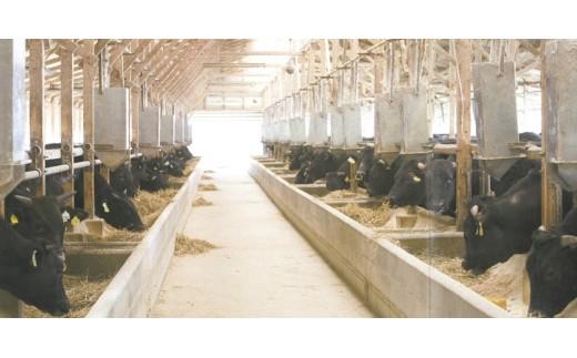 厳選した伊万里牛を一頭買いしています。