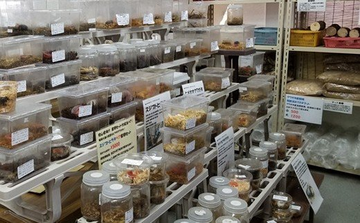館山クワガタセンターでは、色々なクワガタ・カブトムシを飼育・取り扱っています。