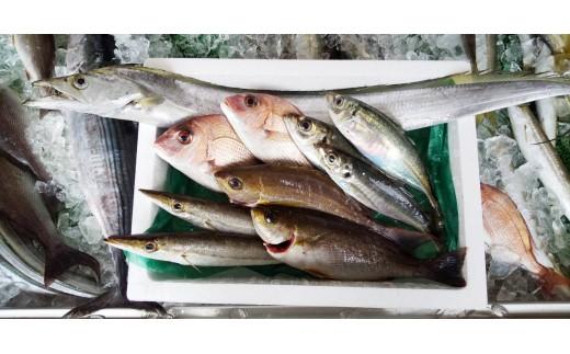 魚屋さんの選んだ新鮮お魚詰め合わせ