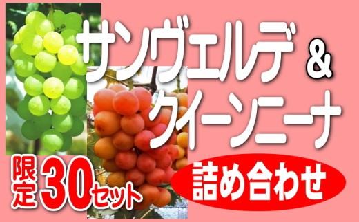 DD-40 サンヴェルデ・クイーンニーナ詰め合わせ(2~3房)