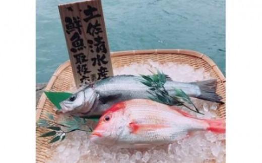 【BK-1】土佐清水の鮮魚詰め合わせ定期便【3回】