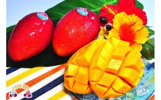 徳之島産完熟マンゴー1kgをお届け致します!とっても濃厚な甘さですよ。