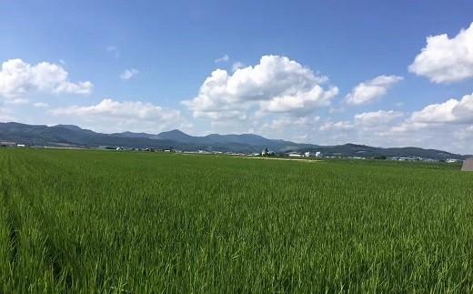 【先行予約】【2021年度米】山内農園 ななつぼし 10kg【無洗米】